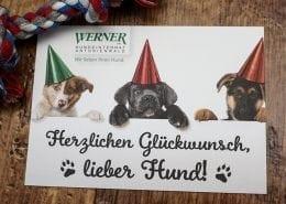 Hundeinternat Glückwunschkarte Osnabrück
