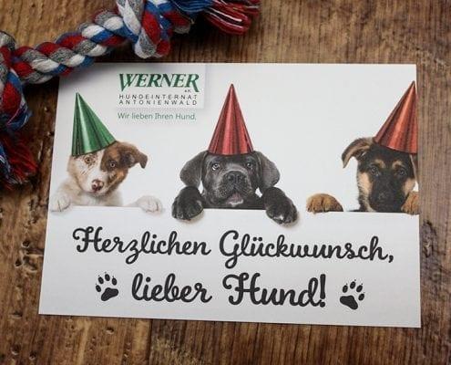 Glückwunschkarte Osnabrück Hundeinternat Antonienwald